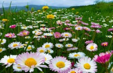 Онлайн-выставка фотографий «А вокруг растут цветы небывалой красоты»